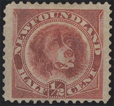 1888 - Newfoundland Dog - Canadian stamp - Stamps of Canada