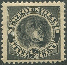 1894 - Newfoundland Dog - Canadian stamp - Stamps of Canada