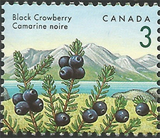 1992 - Black Crowberry - Canadian stamp - Stamps of Canada