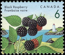 1992 - Black Raspberry - Canadian stamp - Stamps of Canada