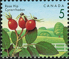 1992 - Rose Hip - Canadian stamp - Stamps of Canada