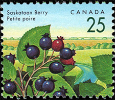 1992 - Saskatoon Berry - Canadian stamp - Stamps of Canada